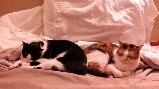 Motel 6 Columbus : our cozy cats