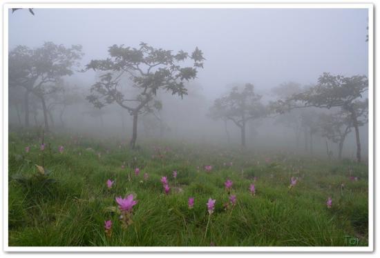 Pa Hin Ngam National Park: สายหมอกกับทุ่งดอกกระเจียว