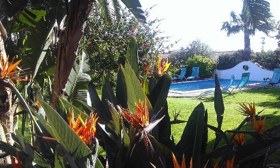 Villa di Giorgi: jardin et piscine