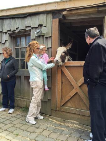 Apple Hill Farm: Sweet donkeys