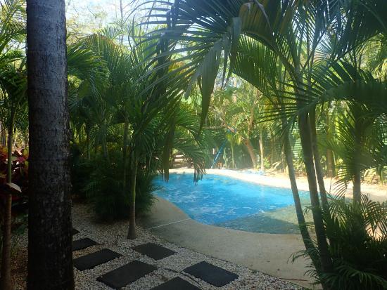 Sugar's Monkey: The pool