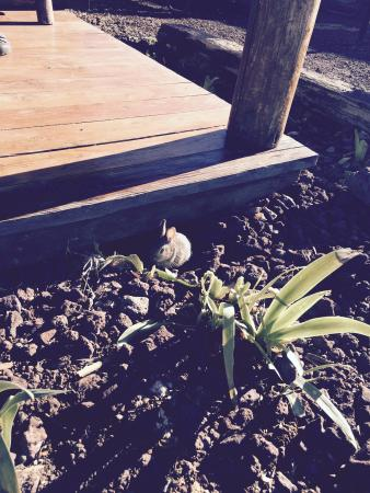 Grand Canyon / Williams KOA: The bunny that lived under our kabin