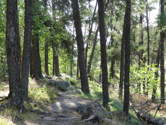 McGillivray Falls Self-guiding Trail: Macgillary Falls spring