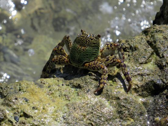 Blue Crystal Beach Resort: Crabs at low tide