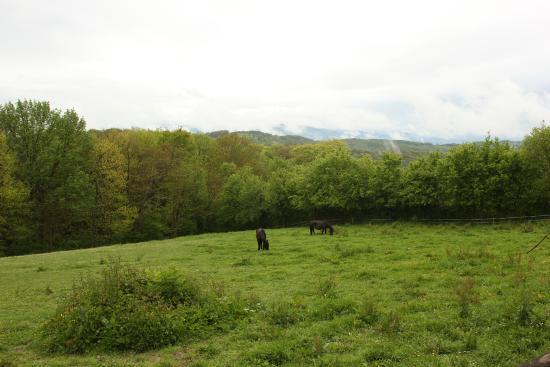 Haras Picard du Sant: Vue sur les Pyrénées 2