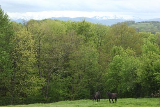 Haras Picard du Sant: Vue sur les Pyrénées