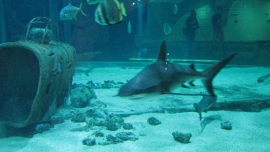 Aquarium - Picture of Seaquarium, Le Grau-du-Roi - TripAdvisor
