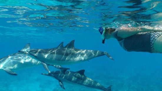Review Manta Ray Night Snorkel Hawaii Island