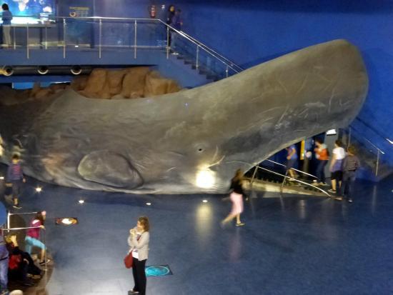 L Aquarium De Barcelona Picture Of L Aquarium De
