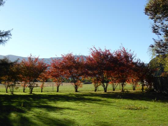 Willowbrook Country Apartments: Gorgeous autumn colours - view from driveway
