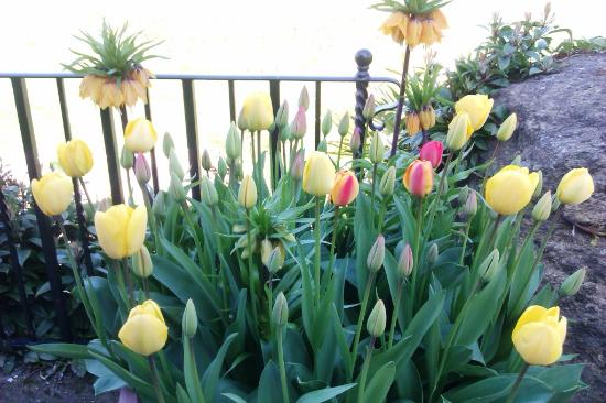 The Tulip Festival At Arundel Castle Gardens Picture Of