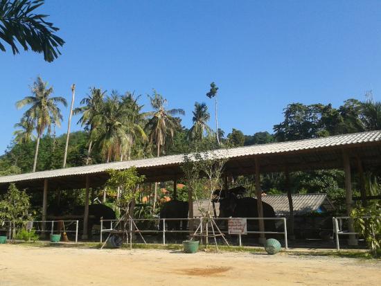 Sanook Sanang Resort: Рядом находится слоновий питомник