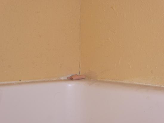 Baymont Inn & Suites Warrenton: bandaid surprise in the shower