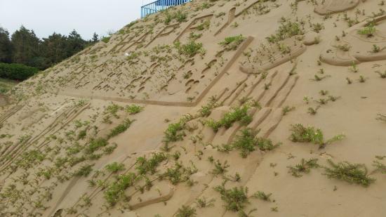 Zhujiajian Island: too many weeds on the sculptures 3