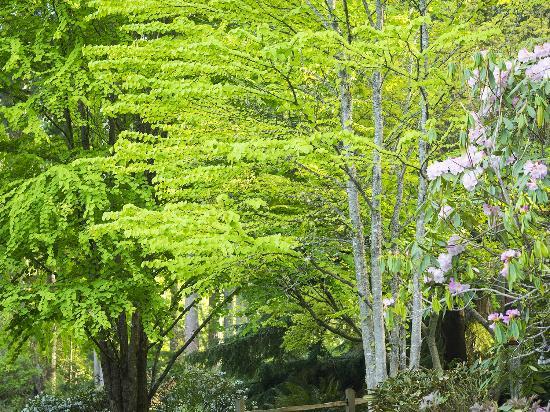 Tree\'s in Green Leaf taken in April 2015 - Picture of Meerkerk ...