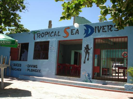 Tropical Sea Divers