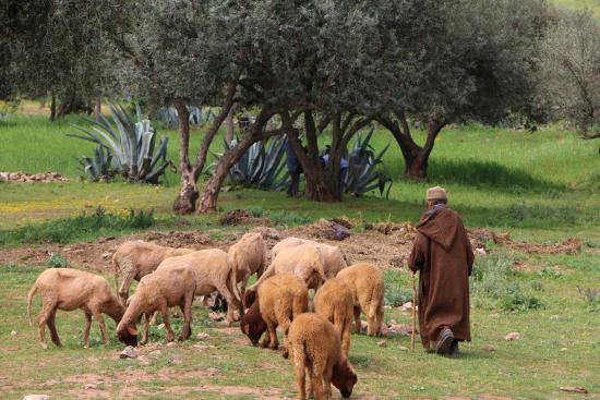 Dar KamalChaoui: Shepherd