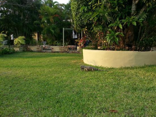 Villablanca Garden Beach Hotel: Villablanca Grounds