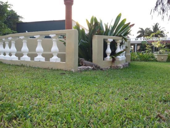 Villablanca Garden Beach Hotel: Villablanca Iguana