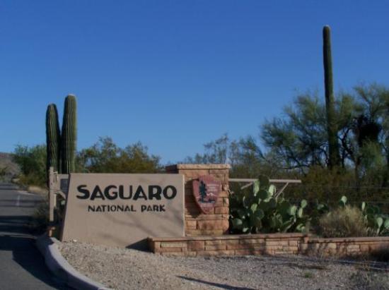 saguaro natl park west unit picture of red hills visitor. Black Bedroom Furniture Sets. Home Design Ideas