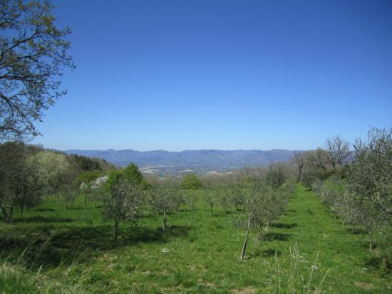 Vicchio, Italien: view from the pool