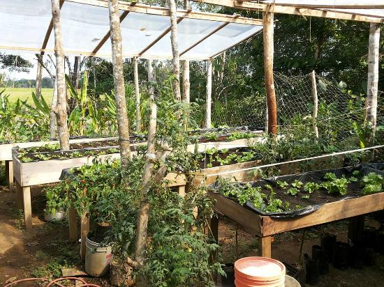 Rancho Raices de Osa : Our Green House