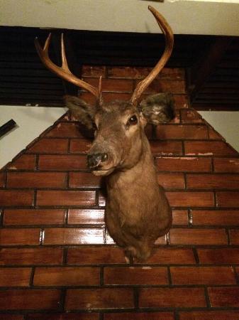 Old West Restaurant: Decoração trazida do Texas