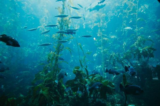 Picture Of Monterey Bay Aquarium Monterey
