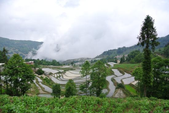 Yuanyang Rice Terraces: In the rice terraces