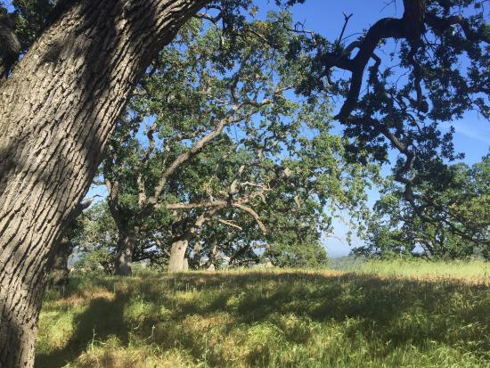 Los Altos Hills, Калифорния: Rancho San Antonio Open Space Preserve