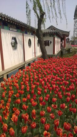 Yang Warrior Memorial Museum : site garden 3