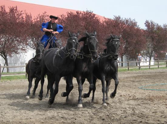 Mata Stud Puszta Five Show Picture Of Hortobagy