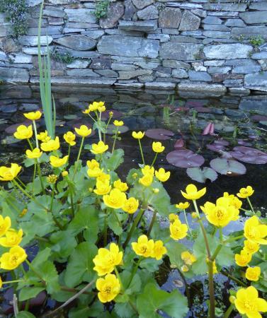 Penpark: Delightful pond
