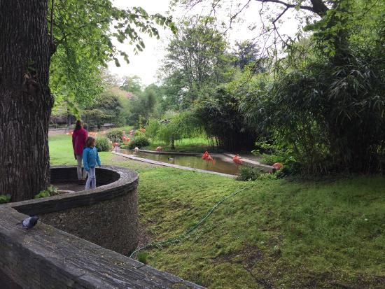 La m nagerie picture of menagerie du jardin des plantes - Menagerie du jardin des plantes paris ...