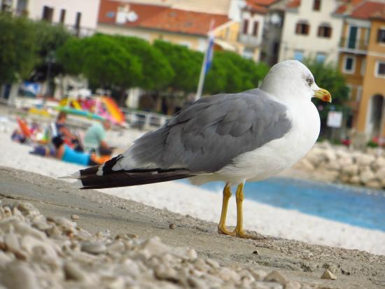 Villa Luppo: Seagull on the beach
