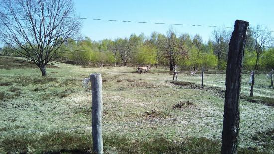 Wustermark, Germany: Wildpferd-Gehege