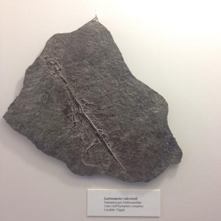 Museo Civico dei Fossili di Besano: Uno dei fossili