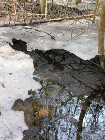 Tiffin Centre for Conservation: Spring melt