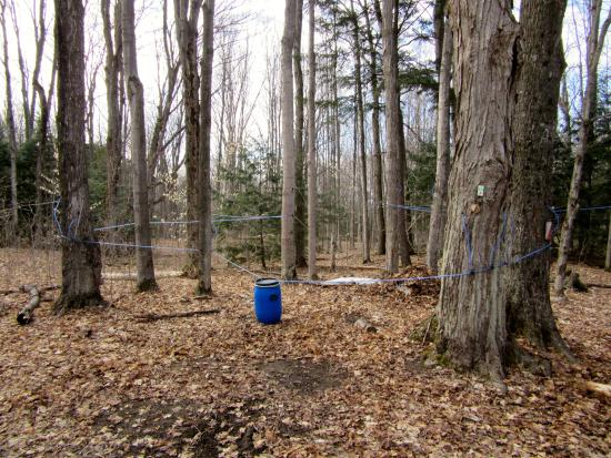 Tiffin Centre for Conservation: Tapping the trees
