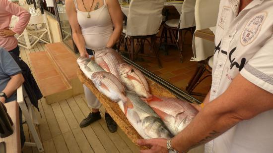 L'anse de Port-Cros : présentation de la pêche du jour