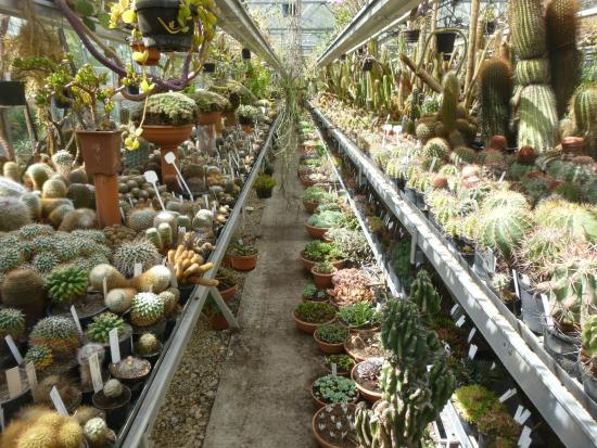 Botanische Tuin Amsterdam : Cactus collection foto van botanische tuin zuidas amsterdam