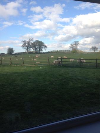 Ironsign Country House: View from my room!