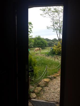 La Cerca del Alcornoque: Vista desde la casa