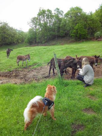 Domaine de la Piale : Parc avec le cheval et les anes