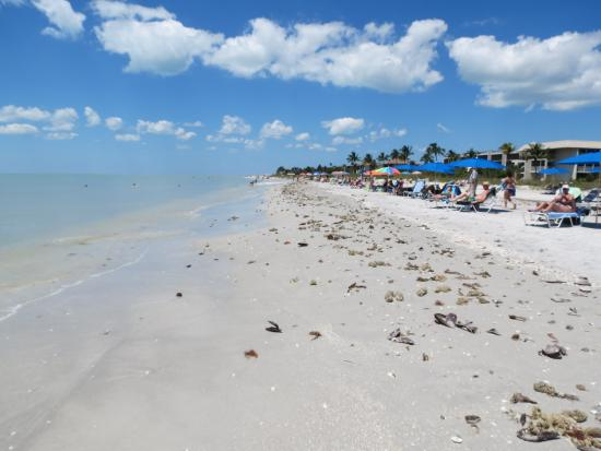 Loggerhead Cay: beach view to the north
