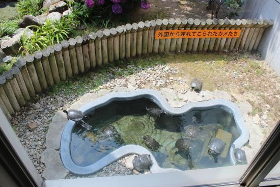Shinjiko Nature Museum Gobius