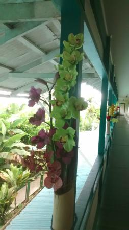 Wild Ginger Inn Hotel & Hostel: Beautiful Orchid decorations