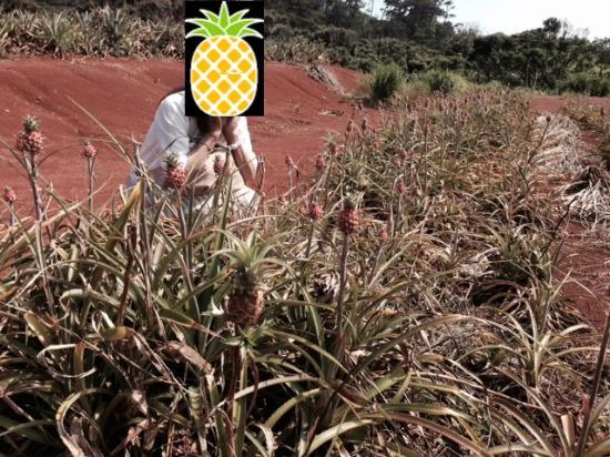 Akamine Pineapple Garden