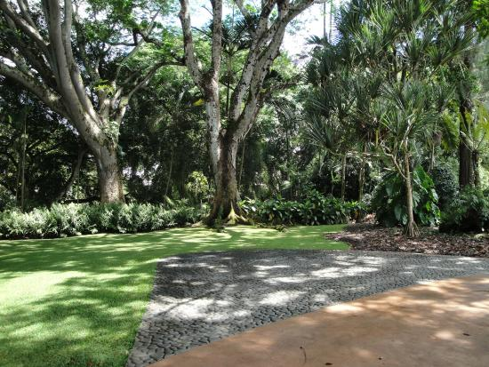 The Park Has A Lot Of Nice Walk Ways Picture Of Wahiawa