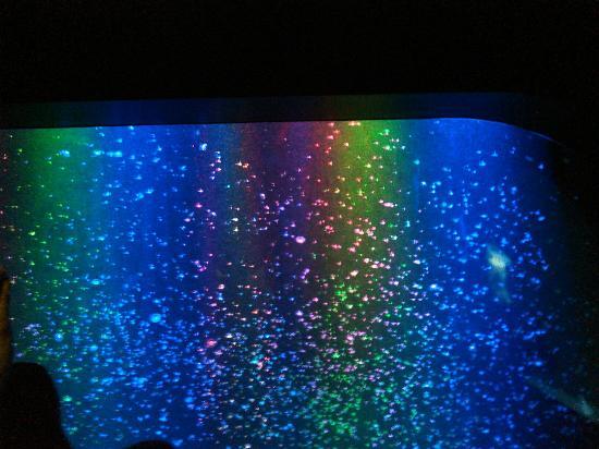 海月に癒されてきました - Picture of Kamo Aquarium, Tsuruoka - TripAdvisor